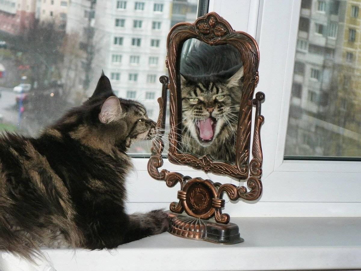 18 питомцев, обезумевших от собственного отражения в зеркале