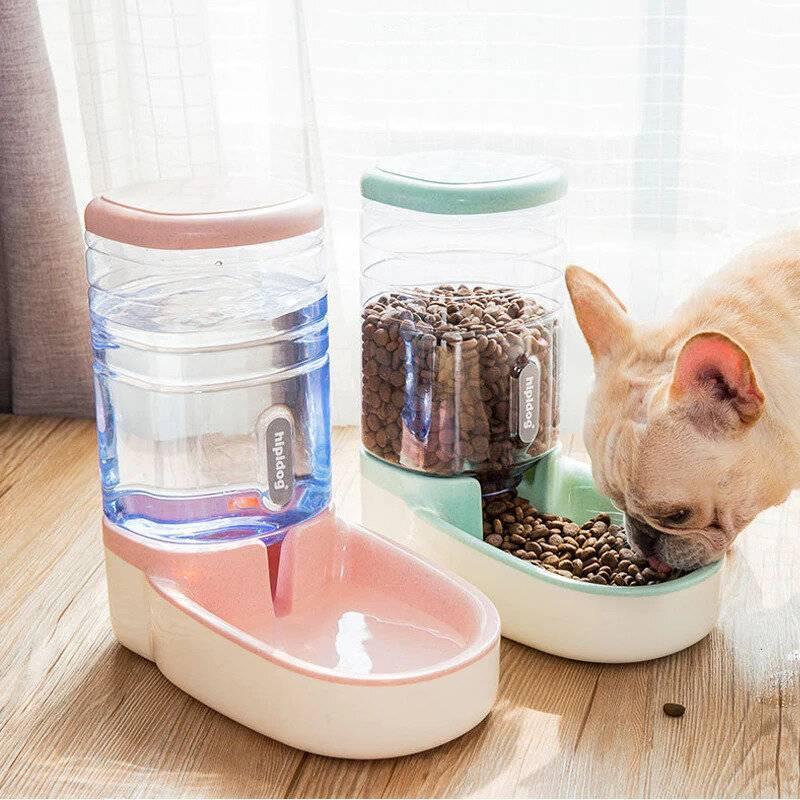 Как заставить кота кушать после болезни – 4 способа принудительного кормления питомца