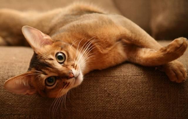 Мерзнут ли кошки зимой?