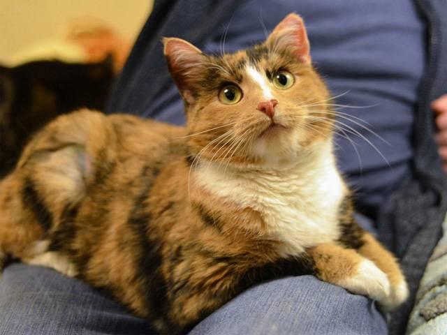 Какую по цвету кошку нужно держать в доме чтобы привлечь деньги и счастье