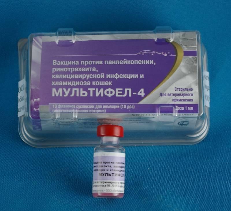 Вакдерм для кошек:  инструкция по применению вакцины от лишая