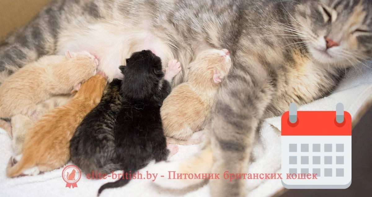 Красивая кошка с котятами