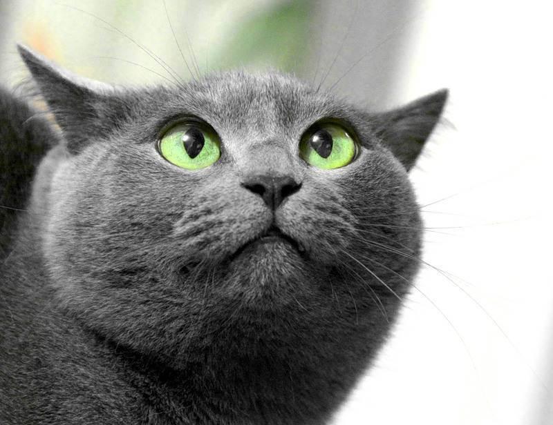 Проблемы с позвоночником у британского котенка