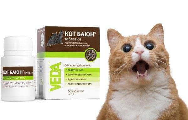 Успокоительное для кошек: обзор эффективных препаратов при течке и стрессе
