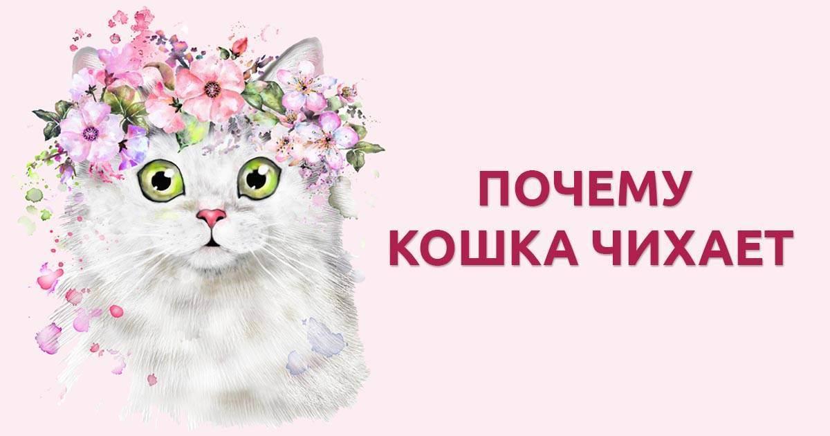 Почему кошка чихает и что с этим делать - лайфхакер