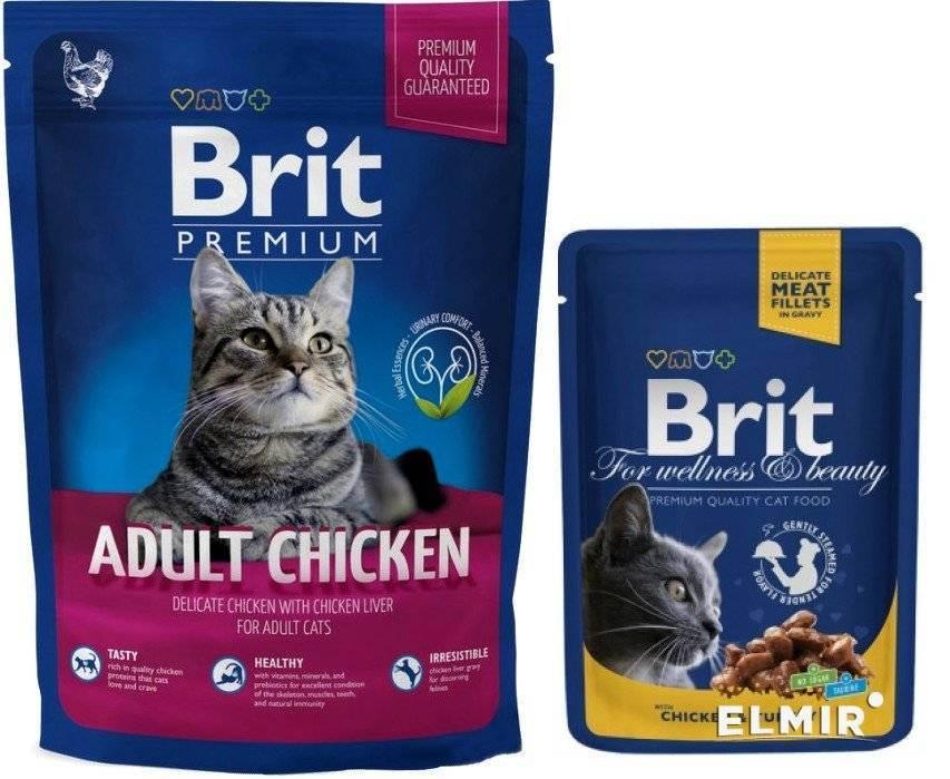 Корм брит (brit care) для кошек — состав, плюсы и минусы