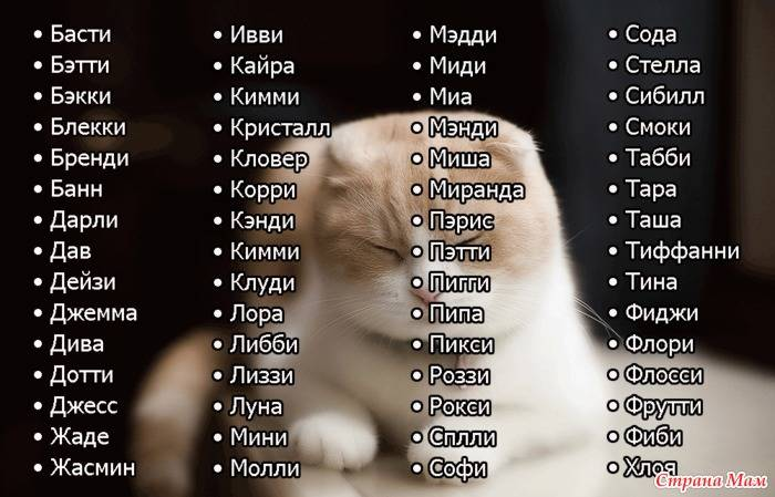 Японские имена для кошек и котов | девочек и мальчиков, список