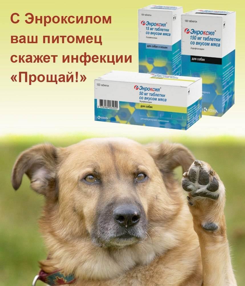 Инструкция по применению «энроксила» в ветеринарии (видео)