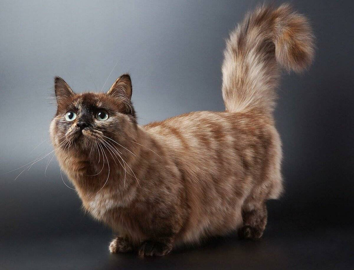 Кошки с длинными лапами: грация и изящество