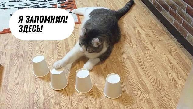 Какая память у кошек, сколько дней она длится, помнят ли коты людей?
