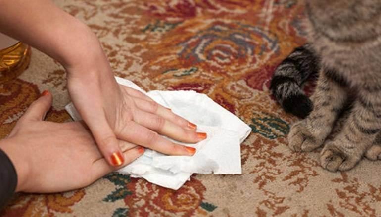 Почему кастрированный кот хочет кошку и как ему помочь