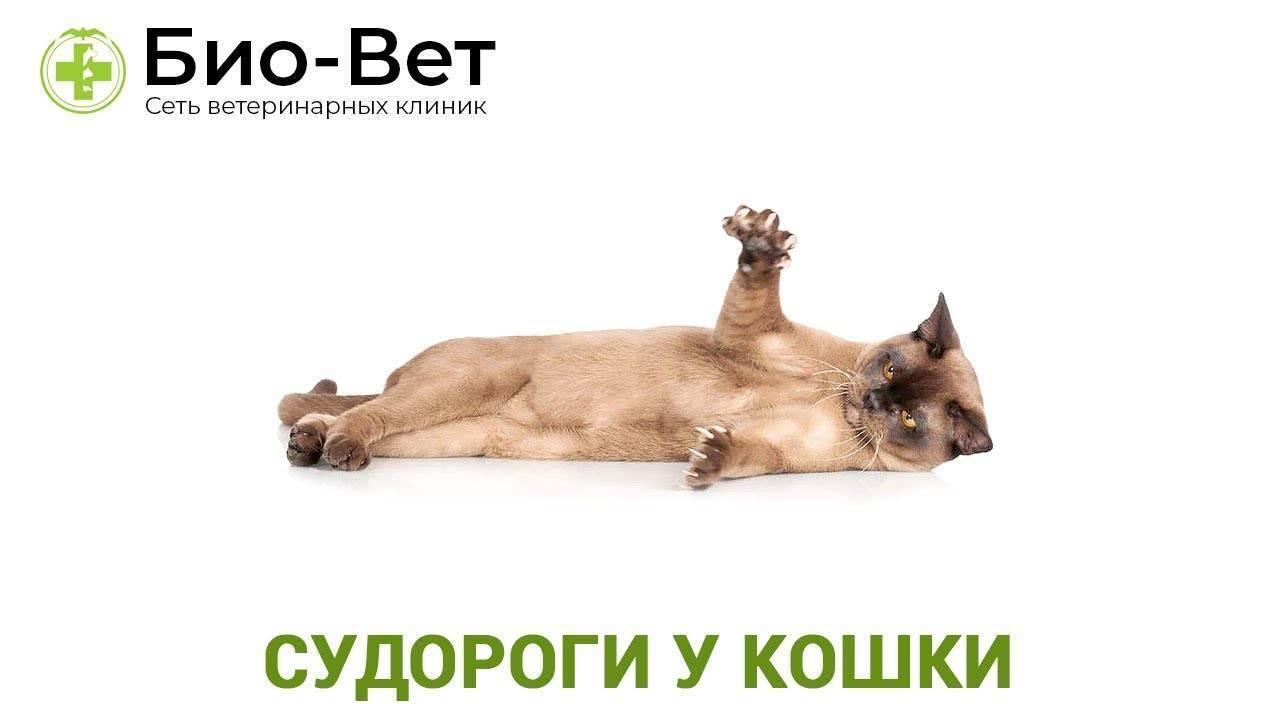 15 причин появления судорог у кошек
