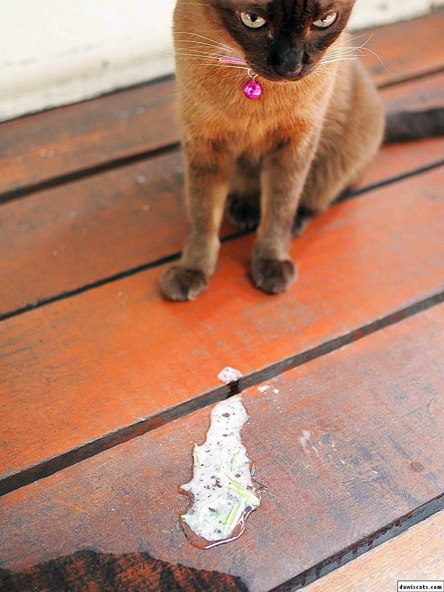 Почему кошку рвет белой пеной