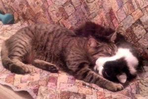 Старый кот стал сильно храпеть. почему кошка храпит во сне