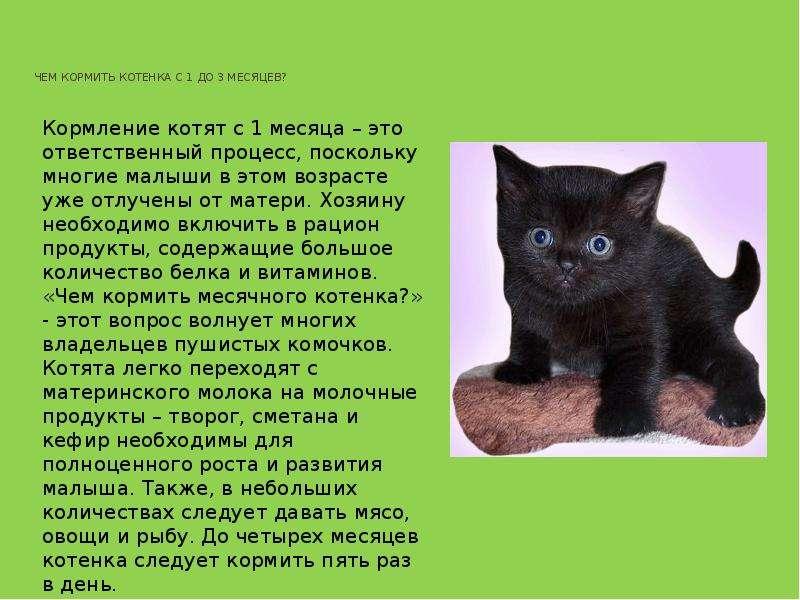 Чем кормить котенка в 2 месяца?