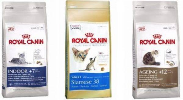 Обзор сухих и влажных кормов для кошек «роял канин»: назначение и состав продукции разных линеек