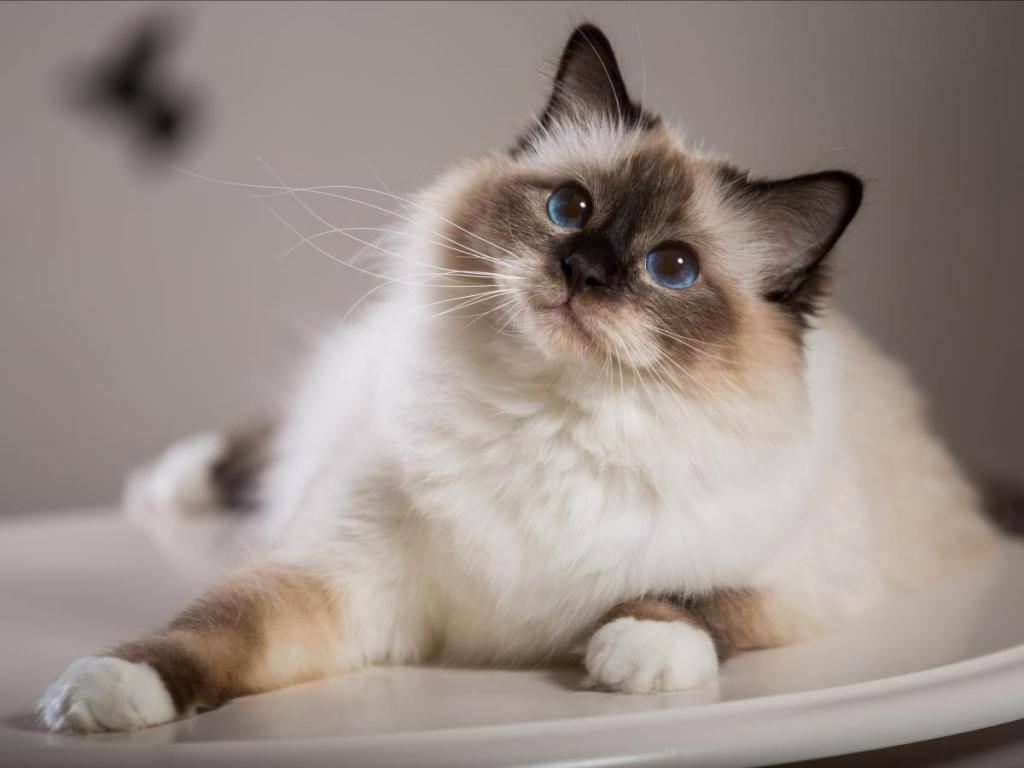 Снится рожающая кошка — что означает сон