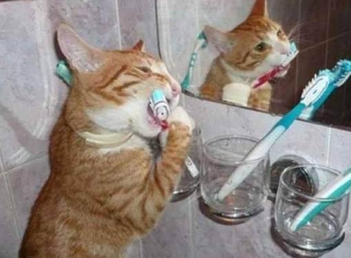 Анорексия у кошек симптомы и лечение — витамины для кошки для аппетита