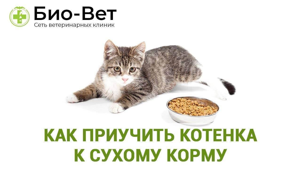 Как перевести собаку на сухой корм с другого корма или натуралки: порядок действий, перевод щенка, возможные проблемы и их решение