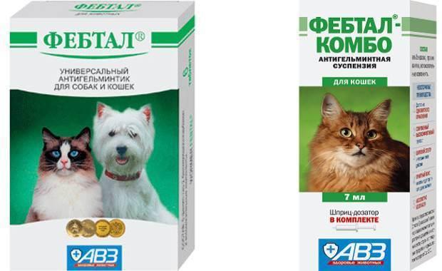 Фебтал для кошек: инструкция по применению, показания и противопоказания, аналоги, отзывы