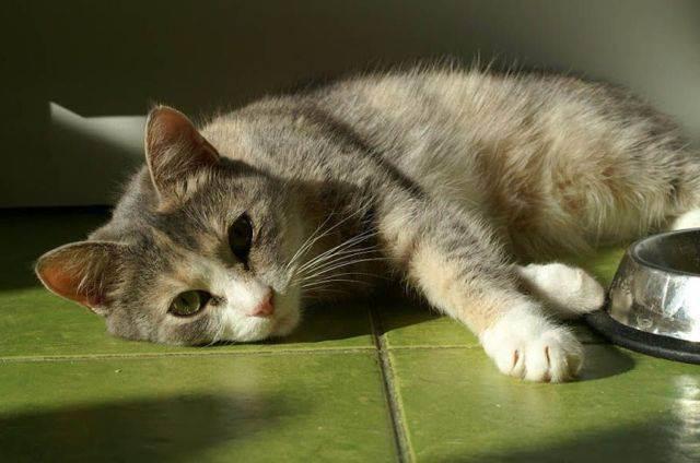 Панкреатит симптомы лечение кошки