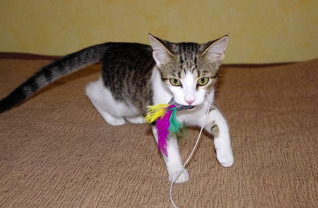 Как научиться дрессировать кошек