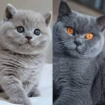Как определить возраст котенка: узнайте, как происходит развитие и рост котенка