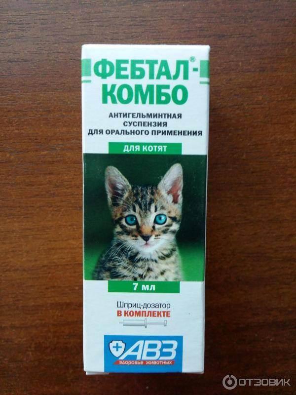 Фебтал для кошек: особенности приема препарата от глистов, отзывы