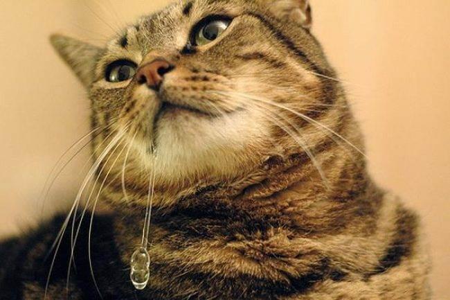 Можно ли заразиться бешенством, если поцарапала или укусила кошка