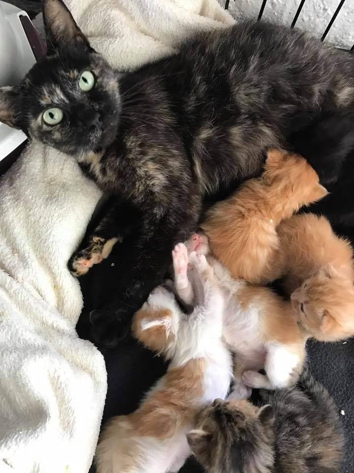 Через сколько дней котята открывают глаза