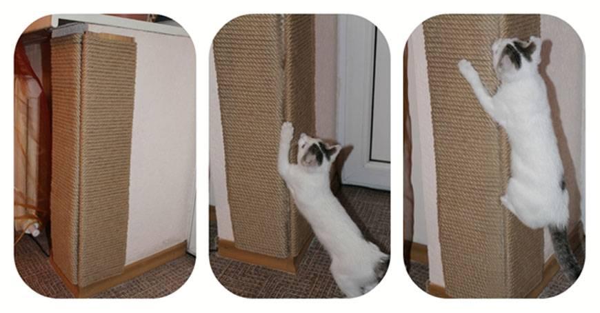 Антивандальные обои от кошек: виды, инструкция по применению