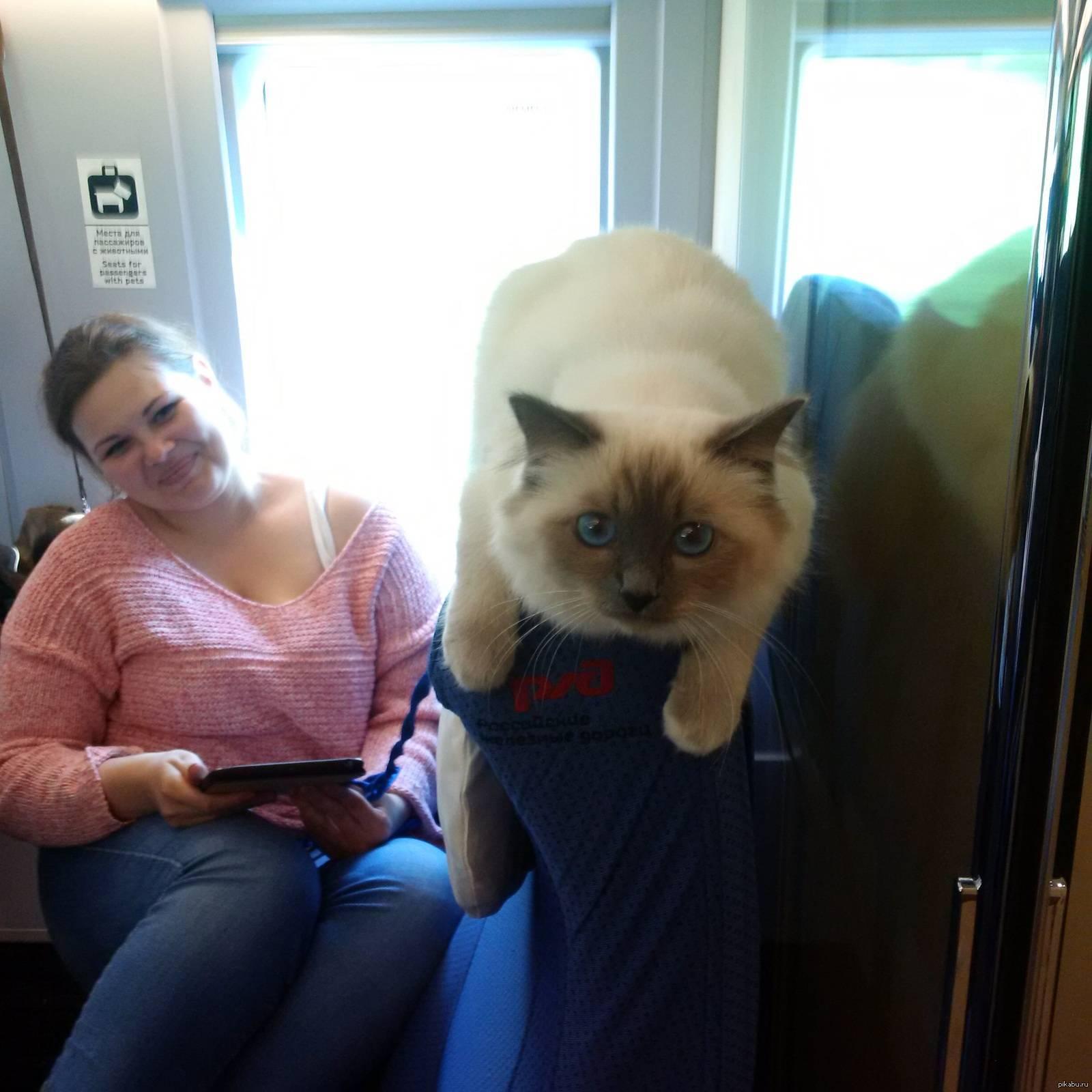Правила перевозки кошек в поезде по россии ржд: какие документы и прививки нужны для дальнего следования