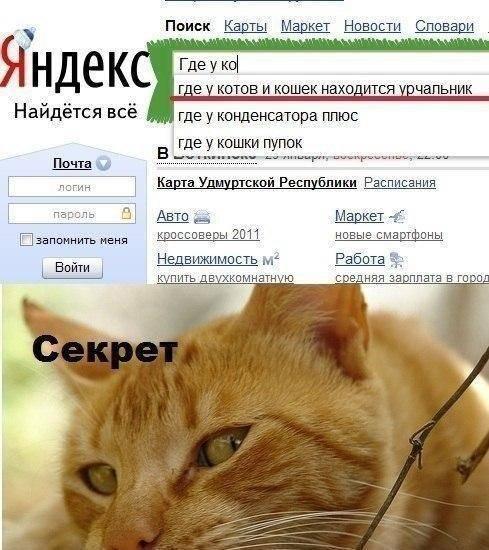 Пупок у кота: есть ли у кошек, почему нет