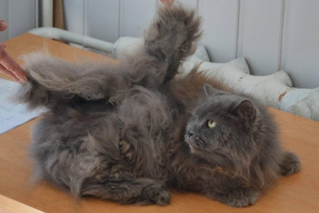 Колтуны у кошек: причины появления. что делать, если у кота сваливается шерсть? выбор колтунореза. как использовать спрей и другие средства?