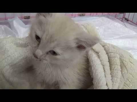 Гастрит у котов симптомы и лечение заболевания
