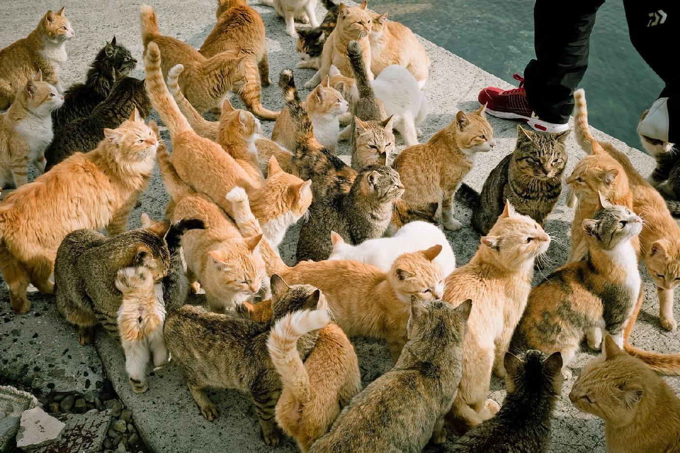 Сколько пород кошек существует на земле? сколько пород кошек существует в мире? сколько бывает пород кошек.
