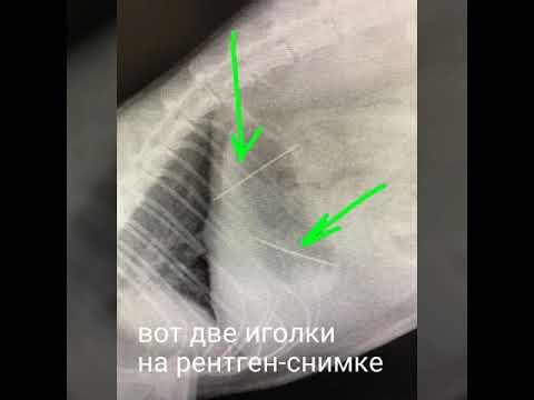 Кот проглотил иголку с ниткой. кот проглотил иголку: как долго выходит?