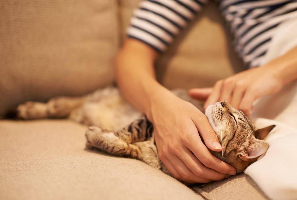 Почему кот не дает себя гладить?