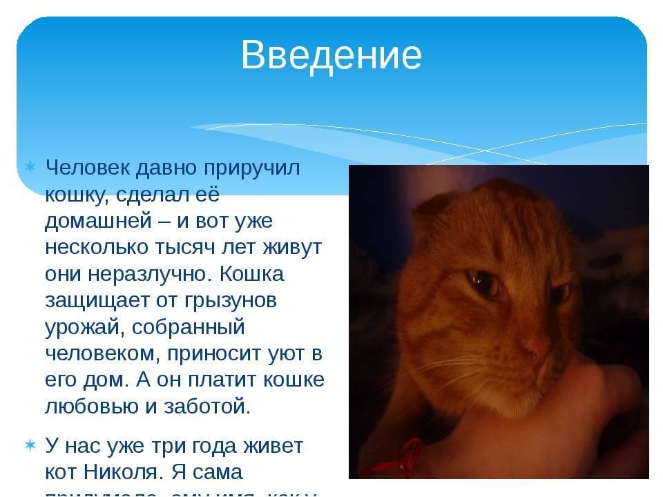 Как человек приручил кошку - kotiko.ru