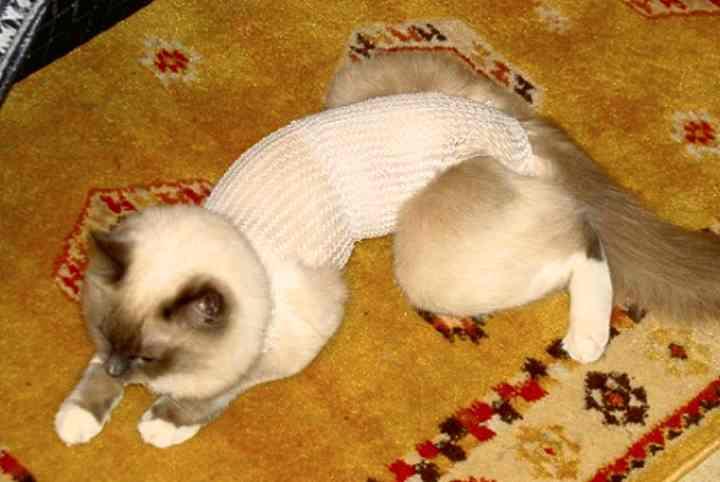 Как выявить причину и оказать помощь коту, если он не может пописать самостоятельно