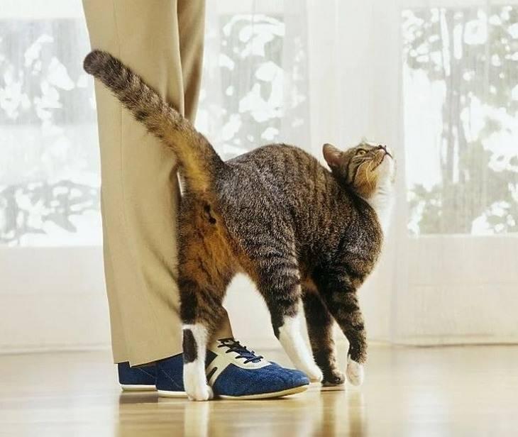 Кошка трется - симптомы, лечение, препараты, причины появления | наши лучшие друзья