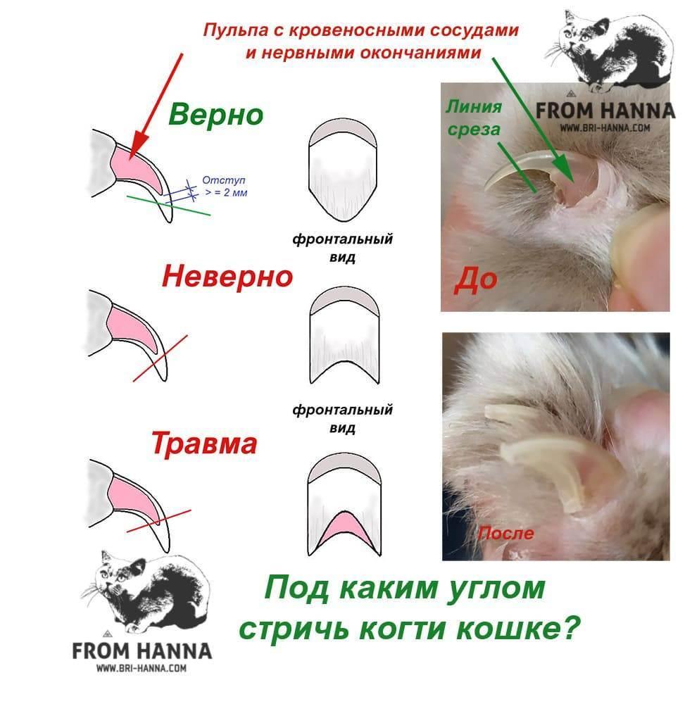 Как подстричь когти кошке, котенку правильно в домашних условиях