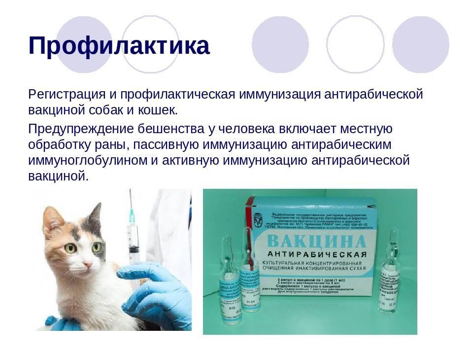 Прививки от бешенства для человека: схема вакцинации, сколько действует вакцина