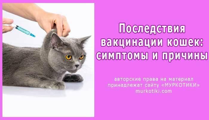 Прививка от бешенства кошке: какая вакцина применяется, как действует, когда делать, рекомендации ветеринаров, отзывы
