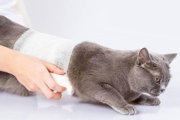 Почему кот волочит задние лапы?