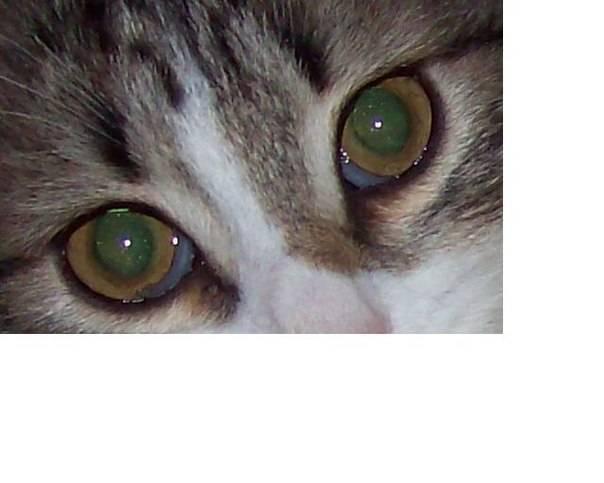 Анизокория у кошек - причины, симптомы, диагностика и лечение - petstime.ru