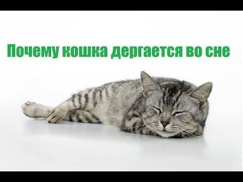 Почему кот храпит во сне и дёргает лапками. кот дергается во сне: почему и что делать? у котенка во сне дергаются лапки