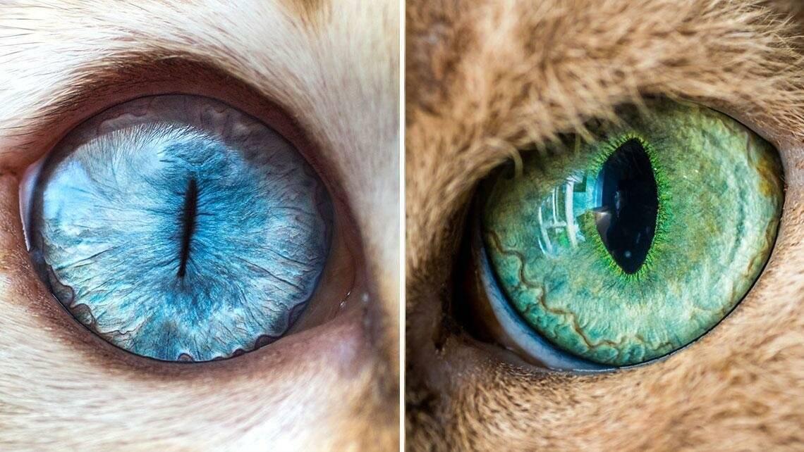 Почему у кошек вертикальные зрачки