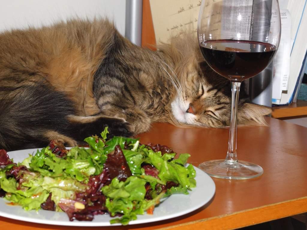 10 продуктов, которые кошки любят кушать больше всего