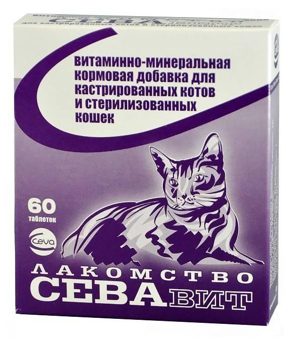6 лучших кормов для кастрированных кошек и котов